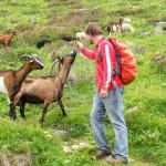 procházky po pastvinách - cvičení v Alpách - Yogata Praha