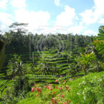 Cvičení na Bali / Rýžové terasy / Yogata Praha